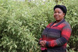 Rachel is a woman in Zambia who has been impacted by Tabitha.